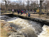 Herring Run in Spring at Oliver's Mill Park