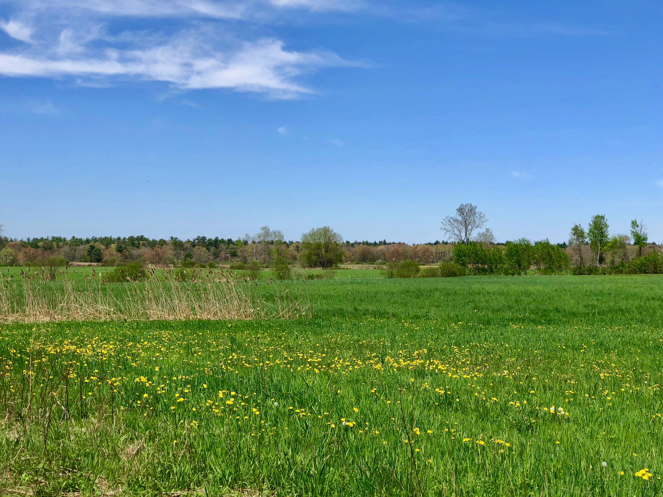 field in North Middleborough